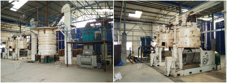 large mustard seed oil production plant project