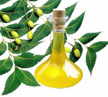 extraction and making of neem oil