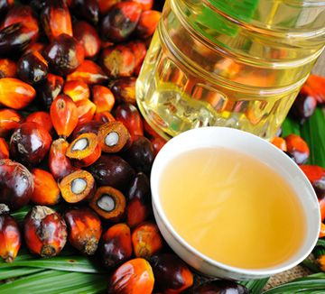 palm oil processing technology